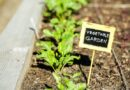 Community Gardening Takes Root in the City