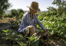 5 Gardening Trends to Watch in 2021
