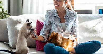 6 Reasons Why Pet is a Profitable Niche